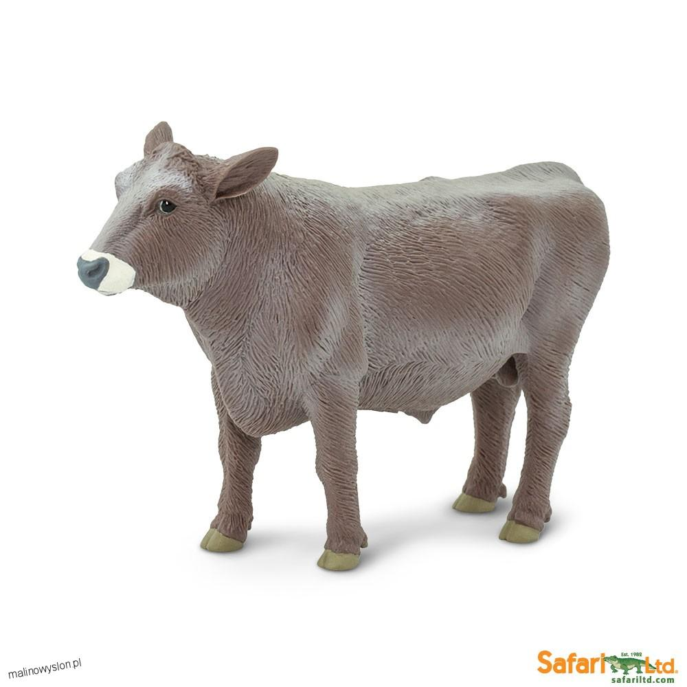 Byk Rasy Brown Swiss